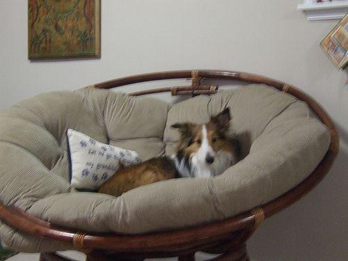 Fotel papasan