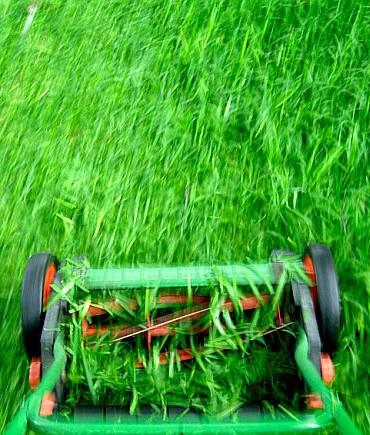 Koszenie trawy
