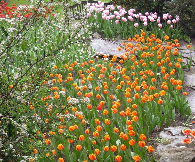 Ogródki skalne