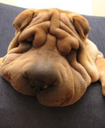 Jak przygotować mieszkanie na psa
