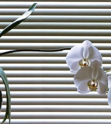 Storczyk, orchidea